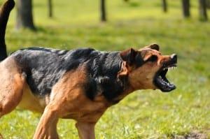dog-bite-michigan
