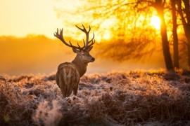 Deer-auto-accident